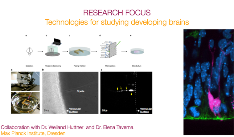 research focus technologies for developing brains